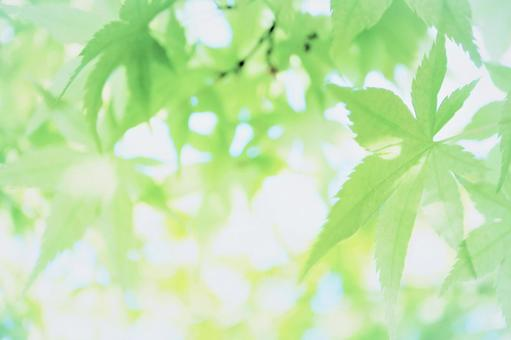 Beautiful watercolor-style image background texture wallpaper with sunbeams and green blue maple leaves Glittering glow Green early summer