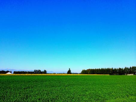 Rural landscape Small wheat fields and blue sky
