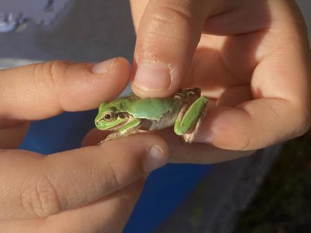 I caught a frog