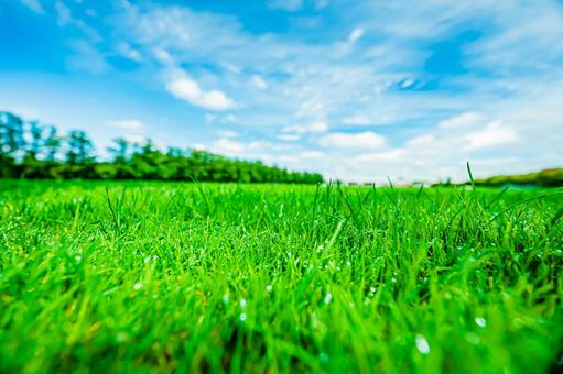 Lawn after rain Clear sky All 6 types (4) Search word / turf Creator name / YUTO @ PHOTOGRAPHER