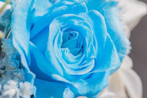 藍色玫瑰花瓣