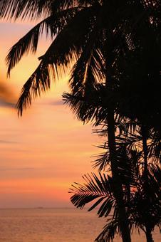 Beach resort 290