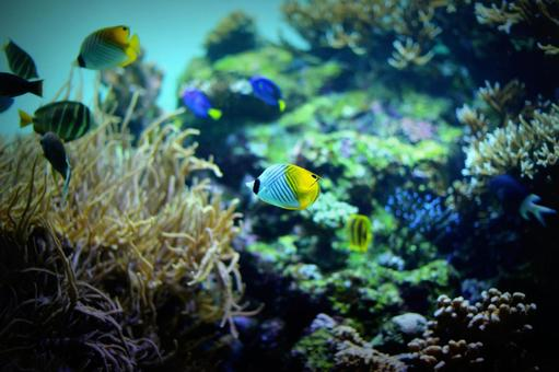 Ocean companions 4