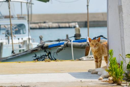 섬의 고양이