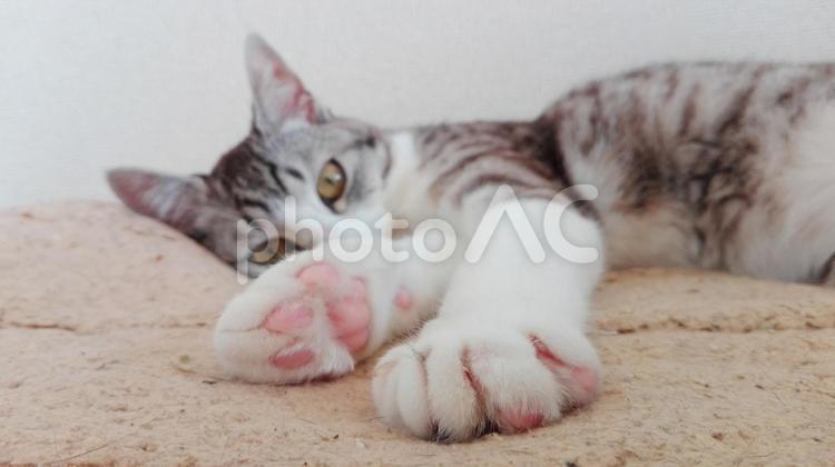 猫の肉球の写真