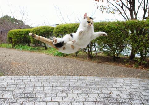 Acrobatic Cat.