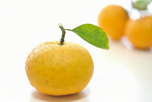 Summer oranges # 1