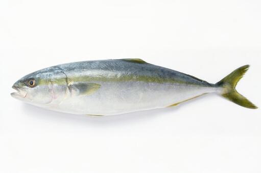 Hamachi · Buri