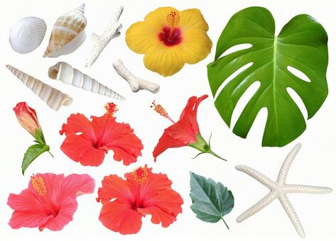 Hibiscus and other parts
