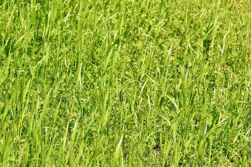 Grassy texture from spring to early summer