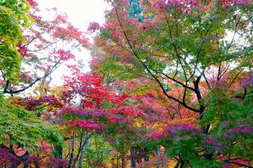 Kyoto Eikando Fantastic autumnal scenery