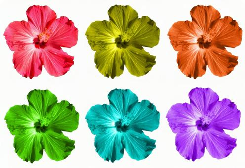 6 colors of hibiscus cutouts