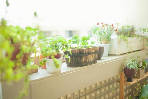 Houseplant 3