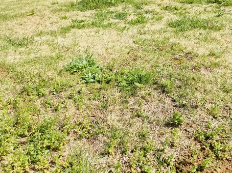 Field / grass