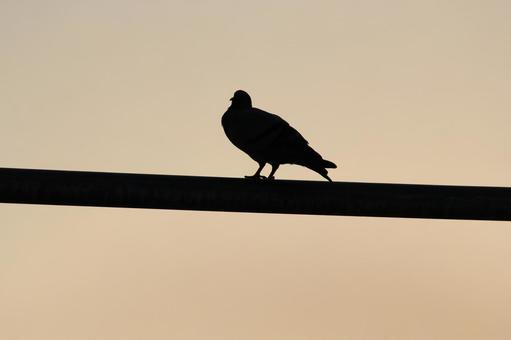 Pakistan bird 19