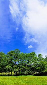 Plateau sky