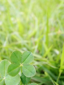 Four-leaf clover (vertical)