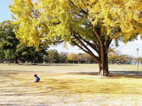 Ginkgo tree and children