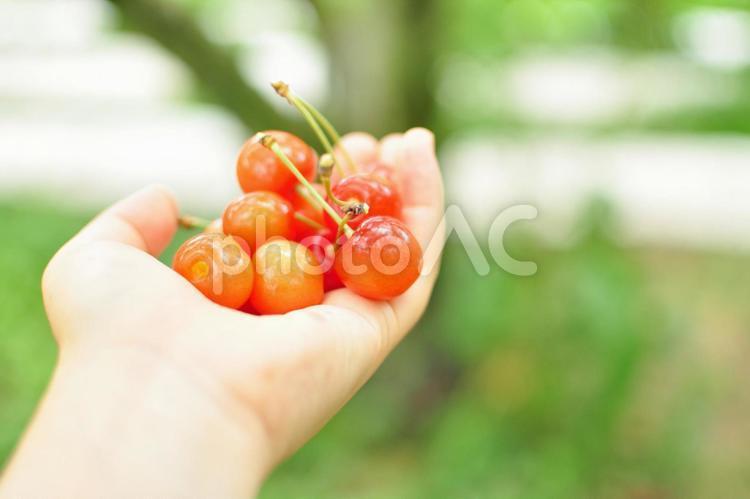 さくらんぼを持つ手の写真