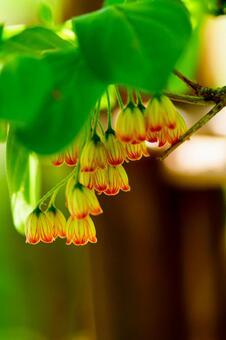 Pretty Sarasadoun flowers