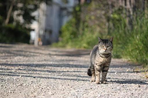 A cat walks.