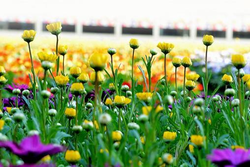 FlowerGarden2015