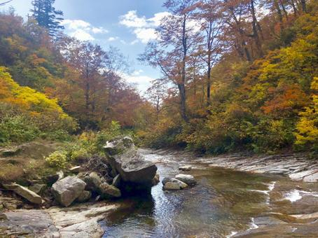 River and autumn leaves