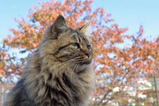 Autumn is in Nya!