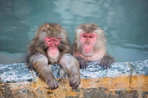 猴子和温泉