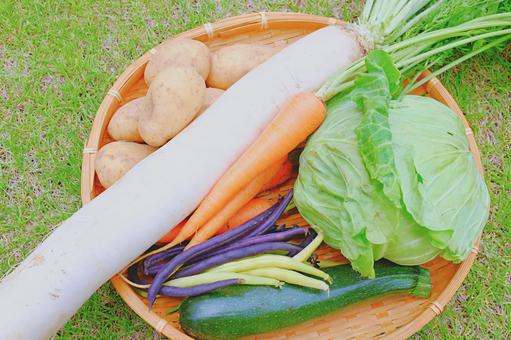 Assorted set of pesticide-free vegetables in early summer