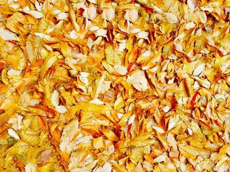Fallen leaf texture background 15