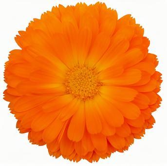 경로들이 _ 오렌지 꽃