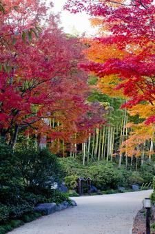 Fall landscape 33