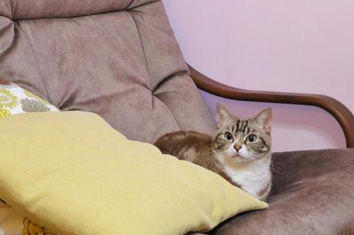 뭔가 걱정되는 귀여운 호랑이 고양이