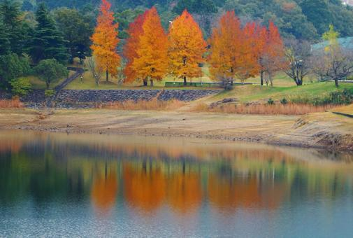 Pond and autumn leaves