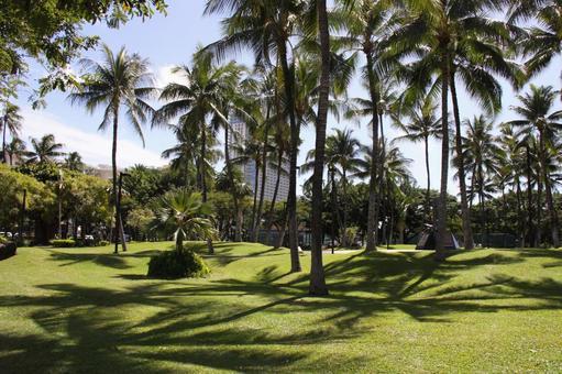 하와이에서 우거진 야자수와 나무 그늘