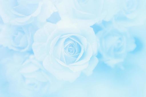 블루 장미의 텍스처