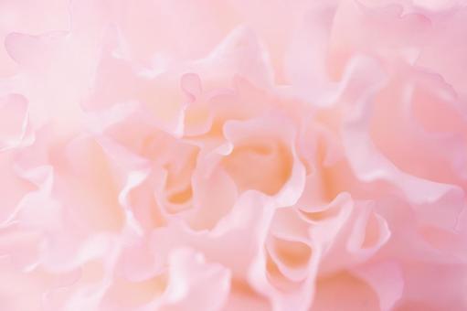 Pink Flower 12