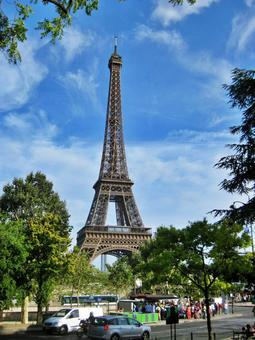 나무와 에펠 탑