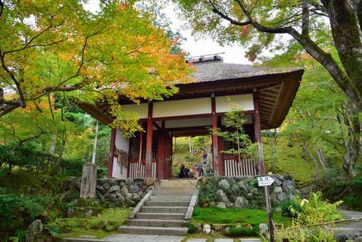Jōjakkoji Temple Niomon Tomomiji Autumn Leaves 003