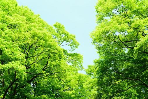 Fresh green 8