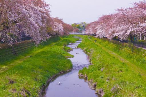 Nogawa 4 of Spring