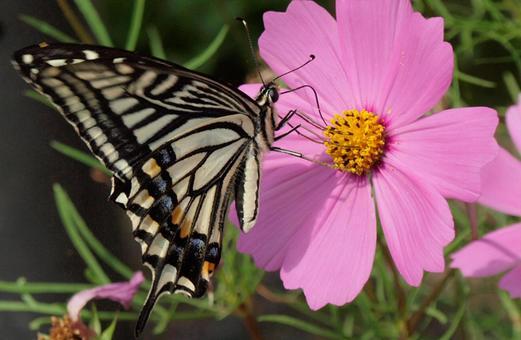 나비의 세계