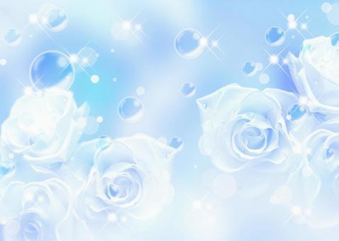 Rose _ Blue background