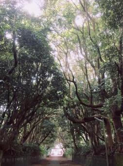 Tree tunnel / sunbeams