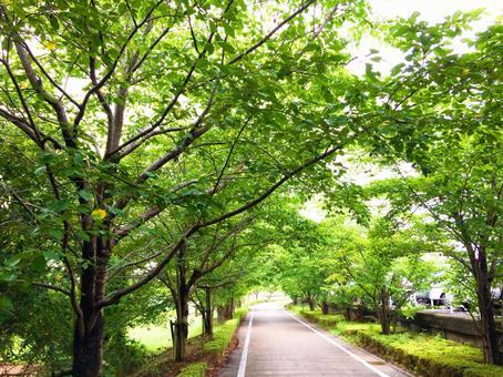 Promenade of fresh green