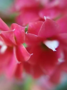 Red flower microscope