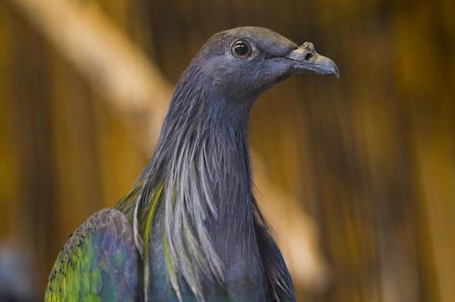 Slender bird