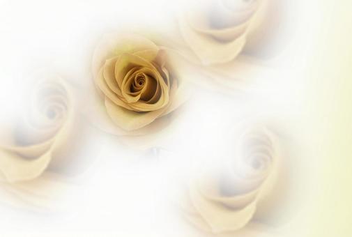 꽃의 여왕 장미 엽서 노란색