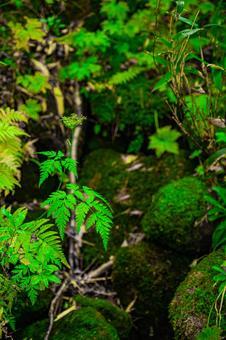 原始森林(4)搜索詞/原始森林創作者姓名/YUTO@PHOTOGRAHER